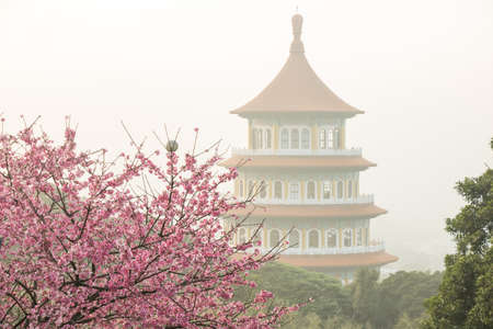 Tamsui Palace, Tamsui Town, New Taipei City-Feb 2,2019: Cherry Blossom of Tianyuan Palace in sunny day. 新聞圖片