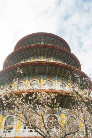 Cherry blossoms are in full bloom at Tianyuan temple, Taipei, Taiwan