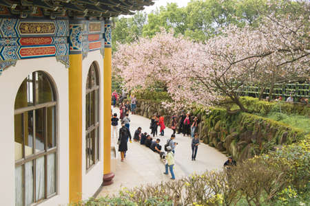 Tamsui Palace, Tamsui Town, New Taipei City-Apr 15 ,2019:  The crowd of tourists with sightseeing view of sakura cherry blossom  in Tianyuan Palace.