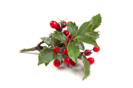 Christmas Holly over White background (With Clipping Path) Stock Photo - 624991