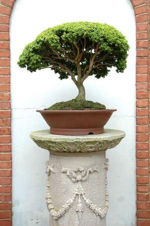 sculpted: Bonsai boom gebeeldhouwde kolom