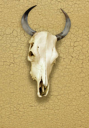 Skull of Bull over a Cracked Surface photo
