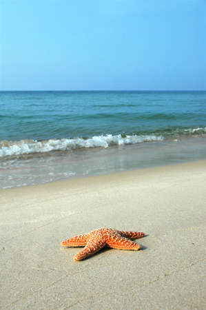 waves crashing: Starfish on tropical beach with waves crashing in the background