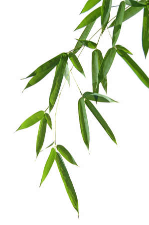 Bammboo leaves isolated over a white background Stock Photo - 1788500