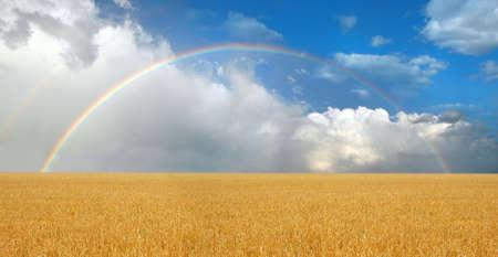 wheatfield: Rainbow over wheatfield