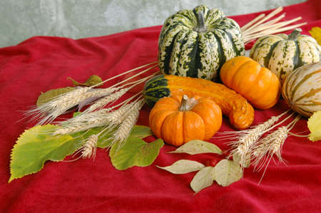 Harvest produce on a red background photo