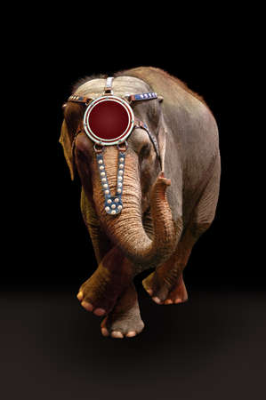 Trained elephant performing a dance over a dark background. photo
