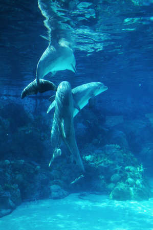Dolphins playing underwater photo