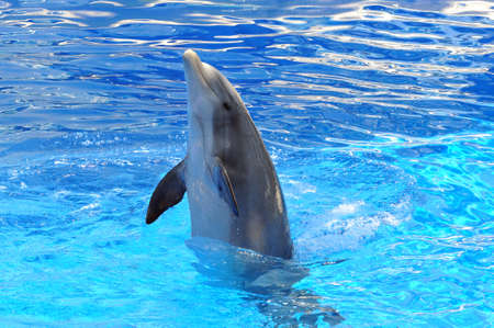 porpoise: Dolphin playing in the water