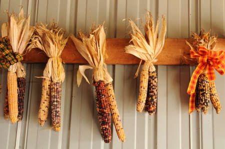 Husks of Indian corn with ribbons on a wall Banco de Imagens