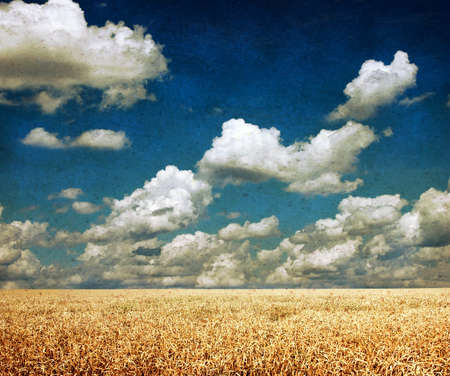 countryside landscape: Vintage landscape of awheat field on a sunny day