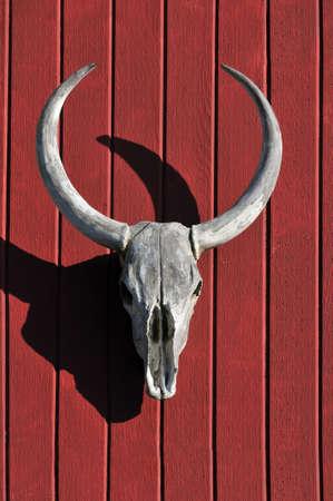 Crâne de taureau sur un fond de bois rouge  Banque d'images