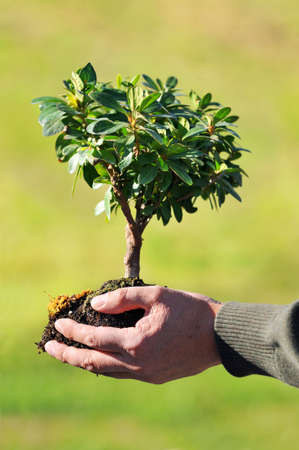 Man's hands holding small tree and soil