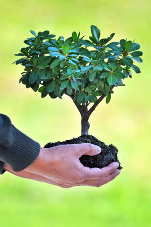 replant: Tree and soil in mans hands over out of focus green background