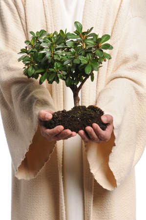 life growth: Jesus hands holding small tree isolated over white background