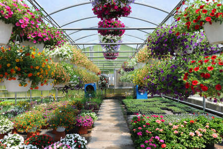 garden center: Greenhouse with colorful flowers Stock Photo