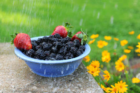 daises: Blackberries and strawberries in a bowl with gentle rain next to yellow daises