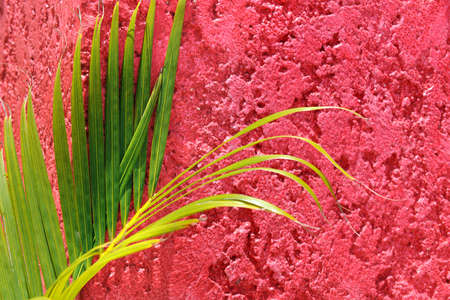 Palm tree branch on red textured wall in Cozumel Mexico Stock Photo - 8130348