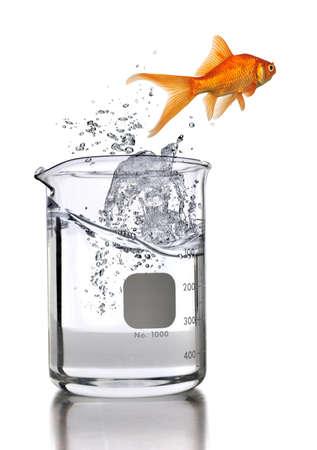 vaso de precipitado: Peces de oro saltando de vaso de precipitados de laboratorio aislado sobre fondo blanco  Foto de archivo