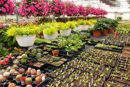 Various flowers and cactus plants inside nursery photo