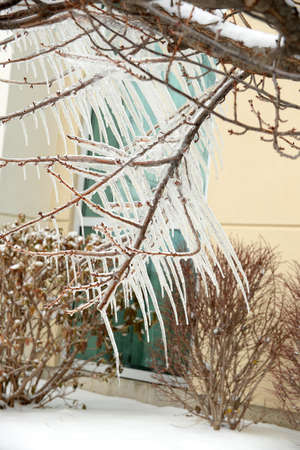 Unusual slanted icicles formed on tree branches after storm Imagens
