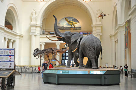 sue: CHICAGO, IL - MARCH 23: Field Museum of Natural History on March 23, 2012 in Chicago, Illinois Editorial