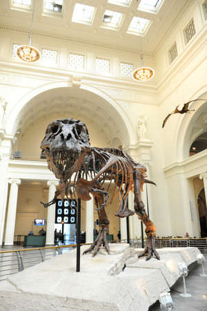 March 22 2016 chicago the skeleton of the tyrannus saurus chicago il march 23 t rex called sue at the field museum thecheapjerseys Gallery