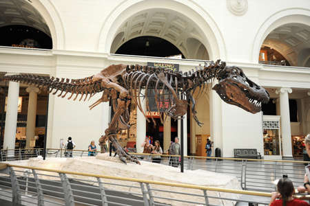 sue: CHICAGO, IL - MARCH 23: T. Rex called Sue at the Field Museum of Natural History on March 23, 2012 in Chicago, Illinois