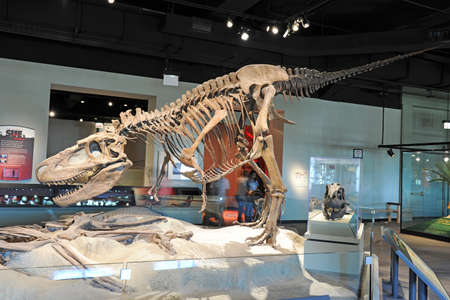 t  rex: CHICAGO, IL - MARCH 23: T. Rex at the Field Museum of Natural History on March 23, 2012 in Chicago, Illinois