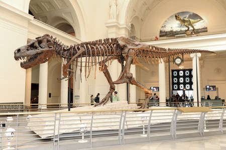 anima: CHICAGO, IL - MARCH 23: T. Rex called Sue at the Field Museum of Natural History on March 23, 2012 in Chicago, Illinois