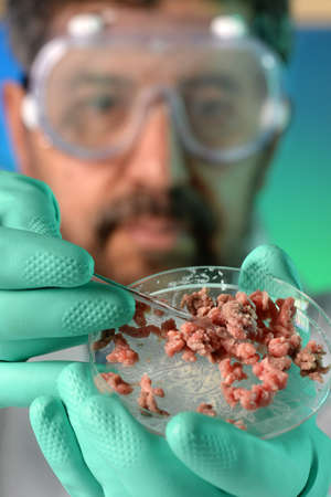 e coli: Microbiologist performing test on meat in a petri dish