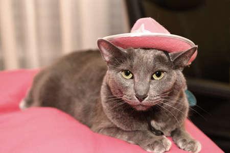 Gato Korat ennuyé portant un chapeau rose Banque d'images - 69566359