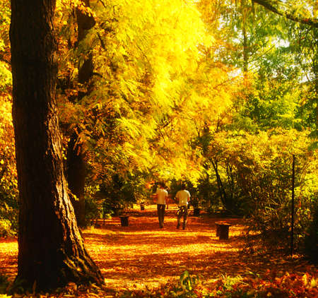 Autumn walk in a botanical garden, two young men playing with colorful leaves and show vitality                 Banco de Imagens