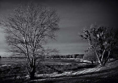 The river Elbe in Wittenberge  Two trees on the dike in the fall as a black and white photography  photo