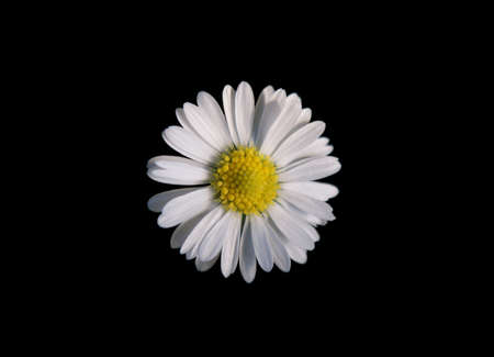 The top view of a daisy, which is isolated from the background  Stock Photo - 15552103