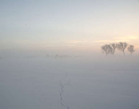 Winter Fog in the Elbe Valley a nature protection area  In the snow tracks of a walker