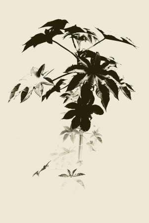 bird 's eye view: A plant in autumn  Stock Photo