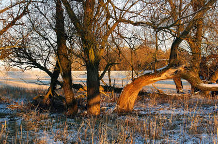 strikingly: A crooked tree in the nature reserve Elbtalaue on the Elbe