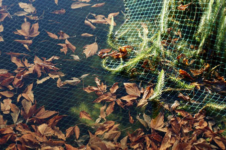 The photograph of a pond surface in autumn protected with a net