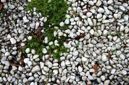 subsoil: The plan view on a subsoil with pebble stones and moss