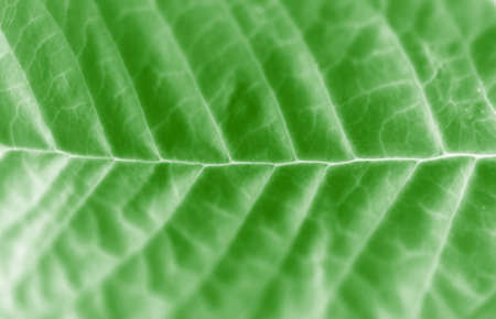 strikingly: The close-up of a leaf
