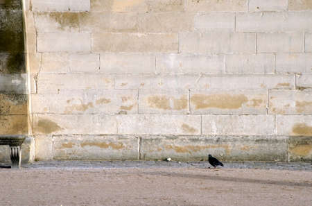 The photograph of a pigeon against a sandstone wall                 photo