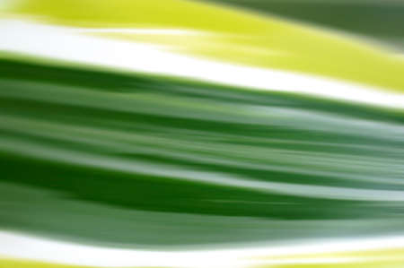 carex: The close-up of a grass leaf abstract