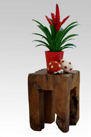 guzmania: The photograph of a flower pot with a Guzmania on a distinctively carved wooden stool                   Stock Photo