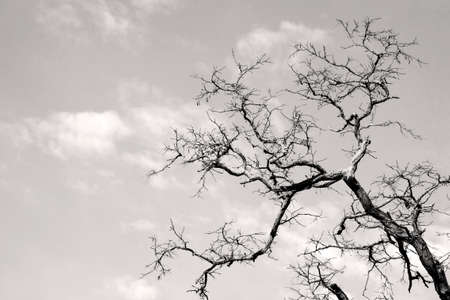 gnarled: The Photography of gnarled tree branches against the light