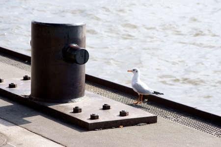 mooring bollards: The photograph of a seagull which stands on a bollard.