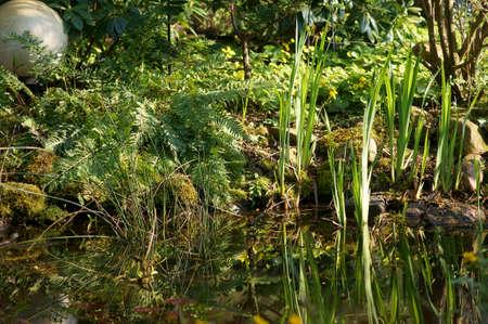 bassin jardin: R�flexions v�g�tales abstraites sur la surface de l'eau d'un �tang de jardin. Banque d'images