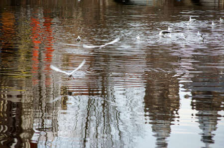 tumult: A flock of seagulls fighting on an abstract water surface for breadcrumbs.