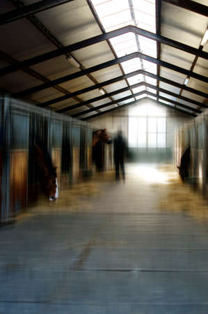 horse stable: The feeding of horses in a horse stable.