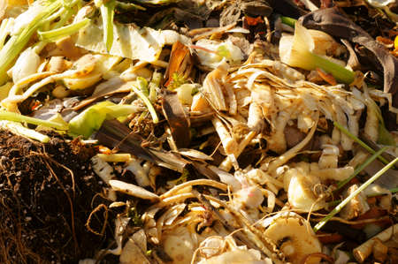 humus: The close-up of a pile of humus in a garden with organic waste from vegetable and fruit bowls. Stock Photo